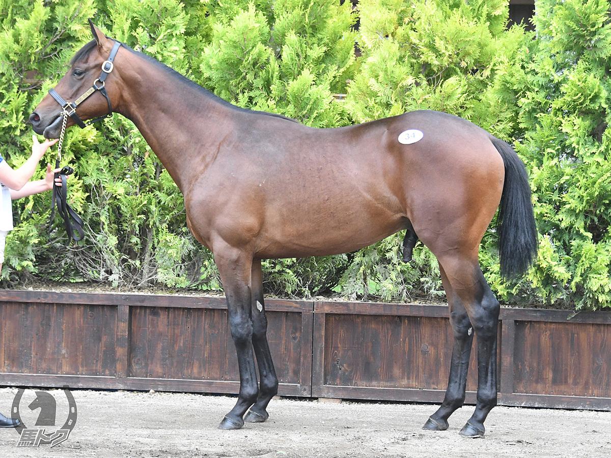 リュウノルフィの馬体写真