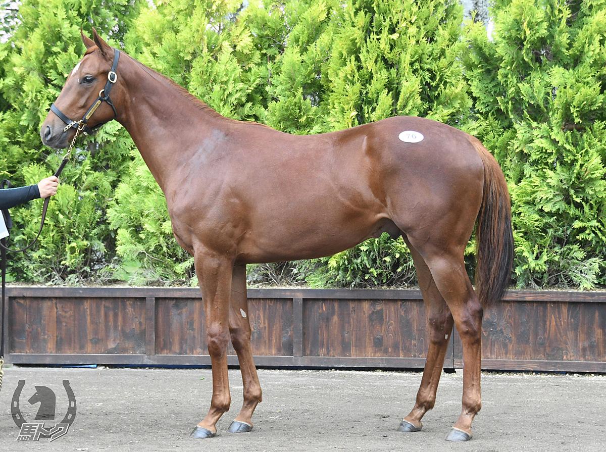 ブレイヴサウンドの馬体写真