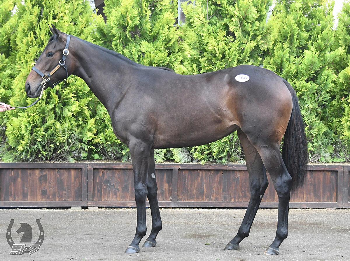 カナタの馬体写真