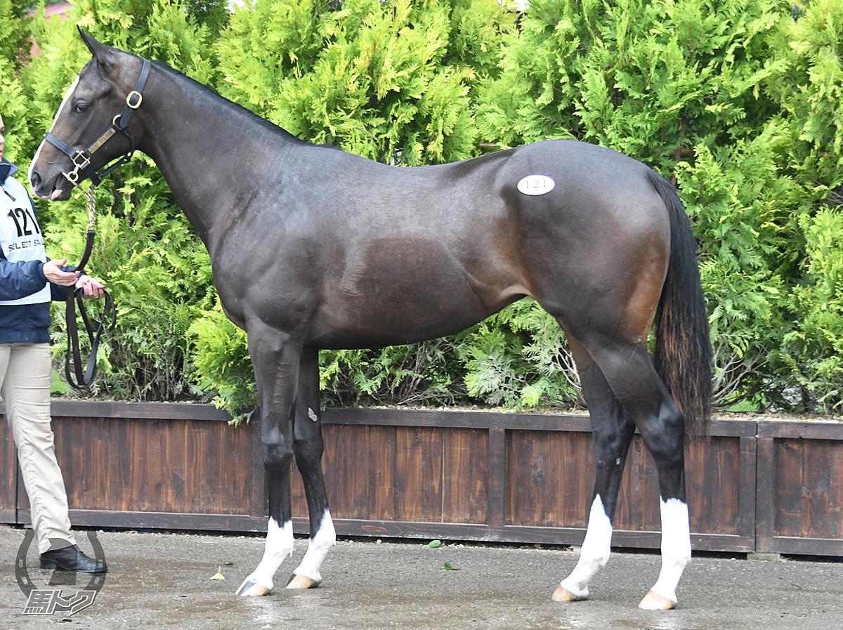 モリンガの馬体写真