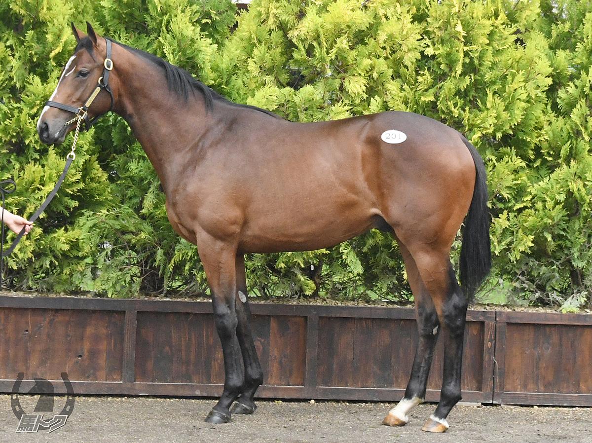 ハーレムシャドウの馬体写真