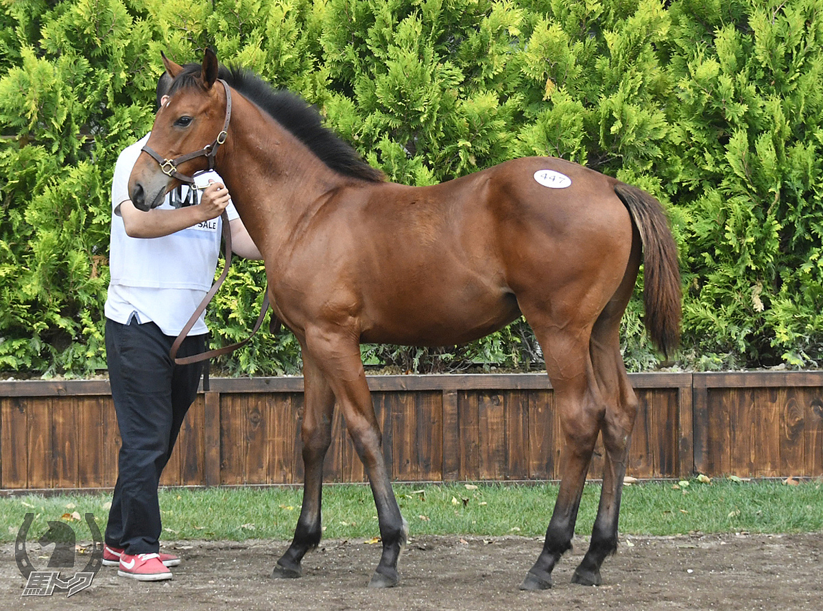 ラストヘビーの馬体写真