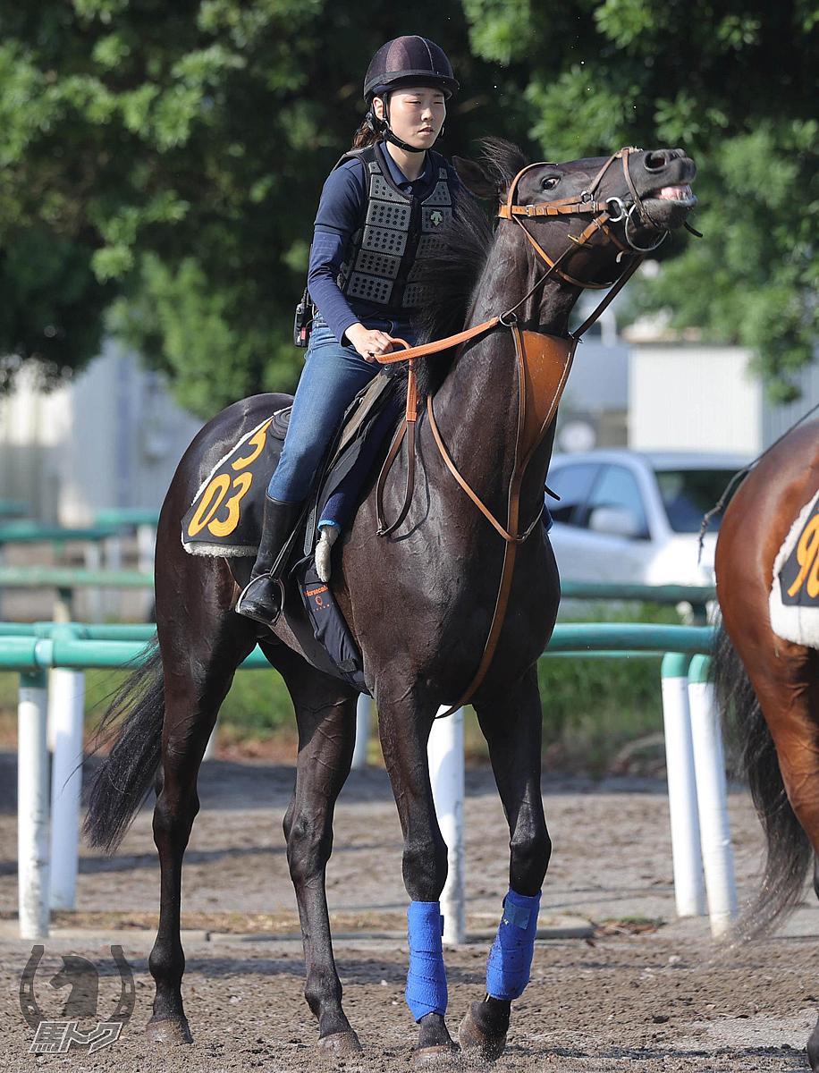 サクラトゥジュールの馬体写真