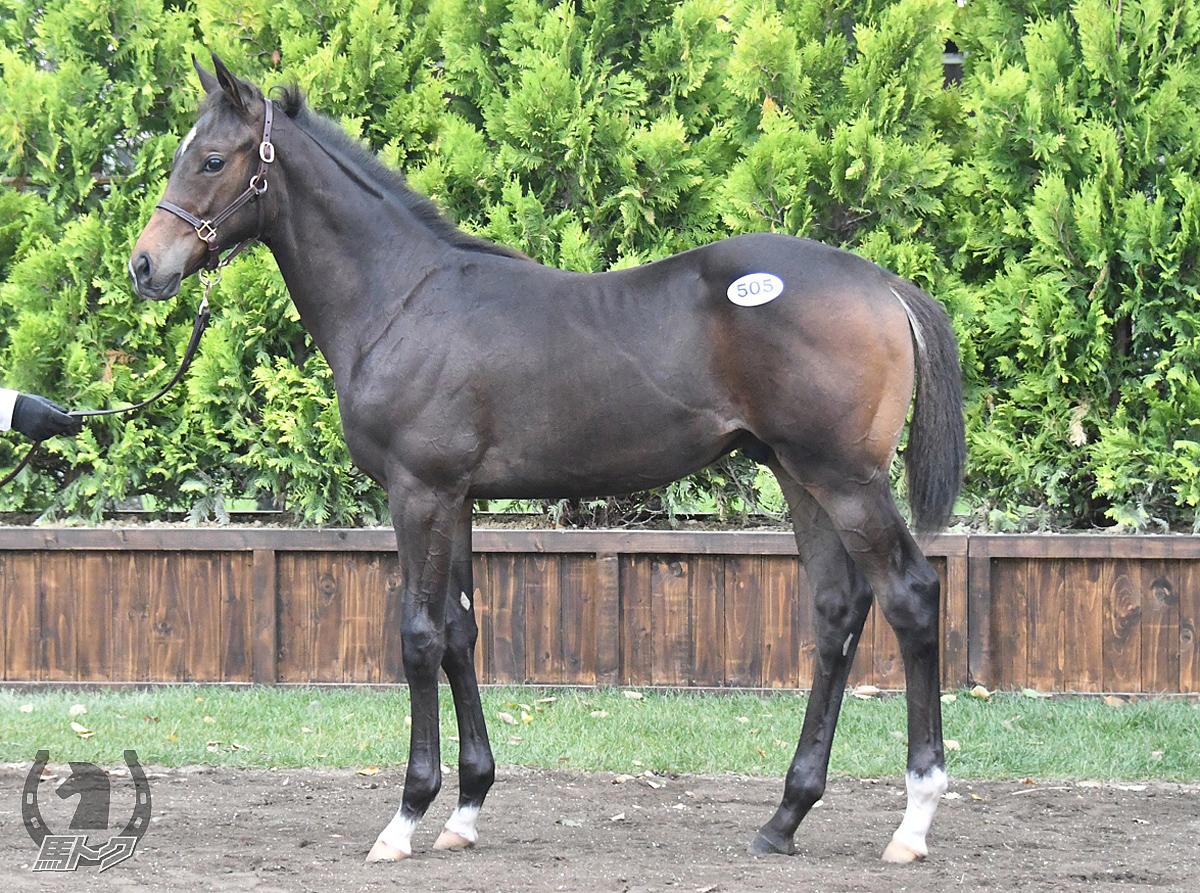 トーセンシュバリエの馬体写真