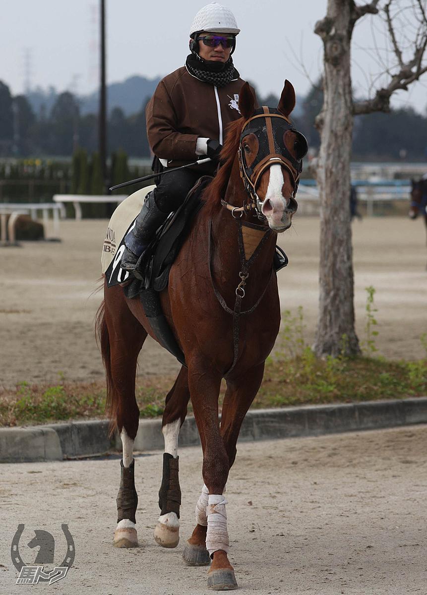 ヒシタイザンの馬体写真
