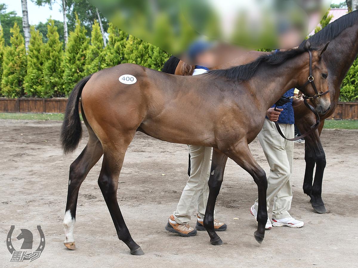 エムテイオーの馬体写真