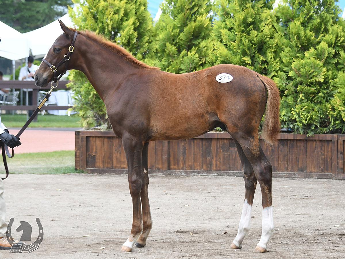 バイシュラバナの馬体写真