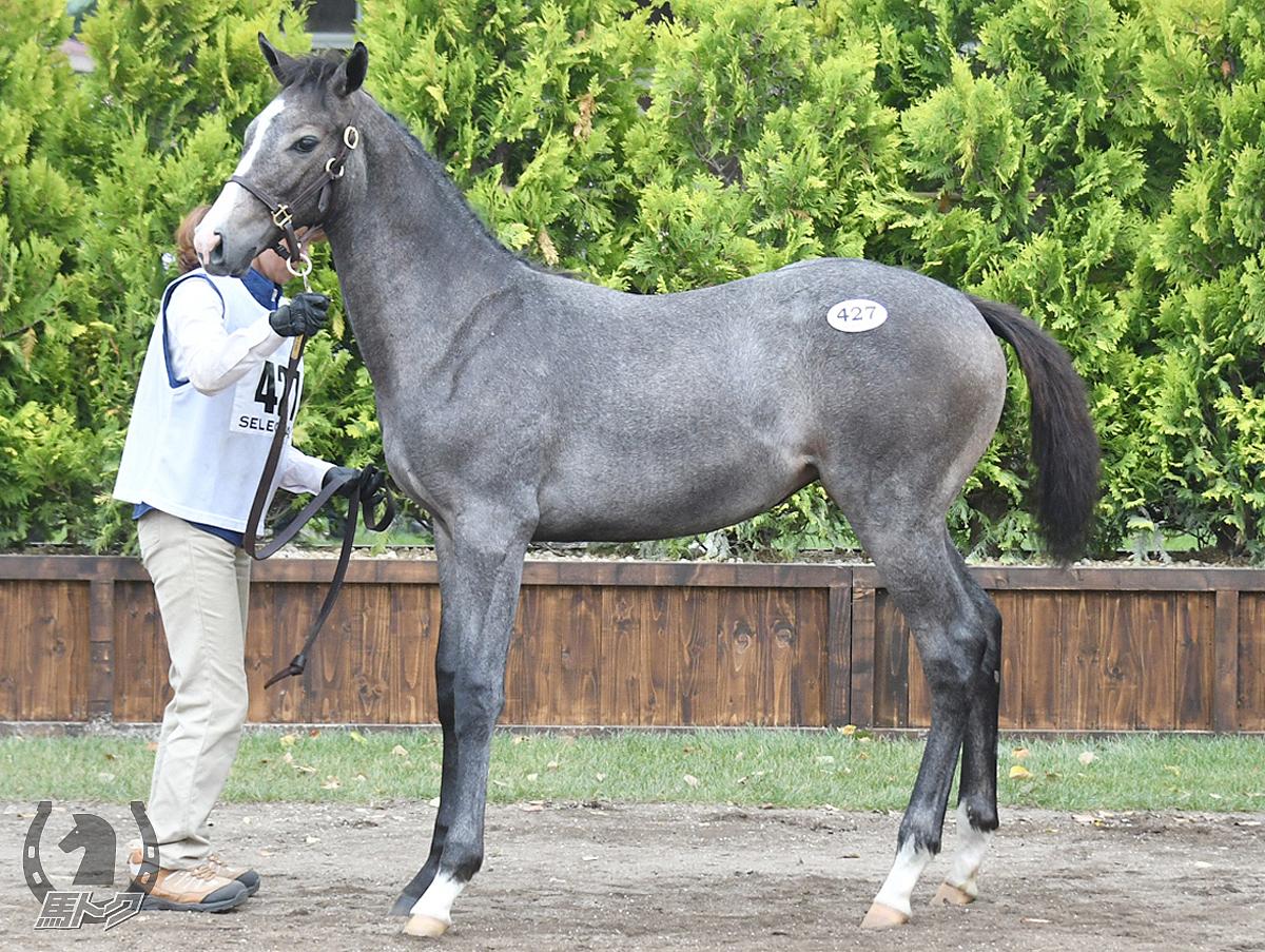 ブランブランブランの馬体写真