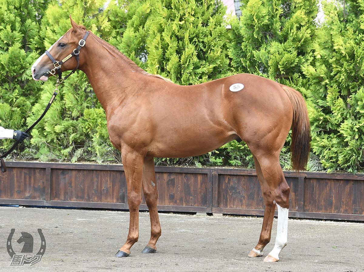 ロブソンテソーロの馬体写真