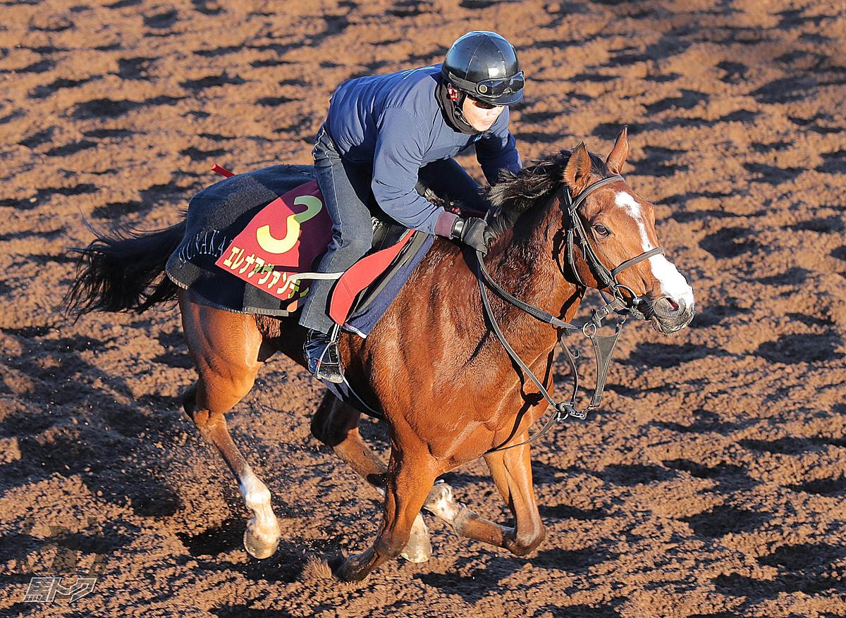 エレナアヴァンティの馬体写真