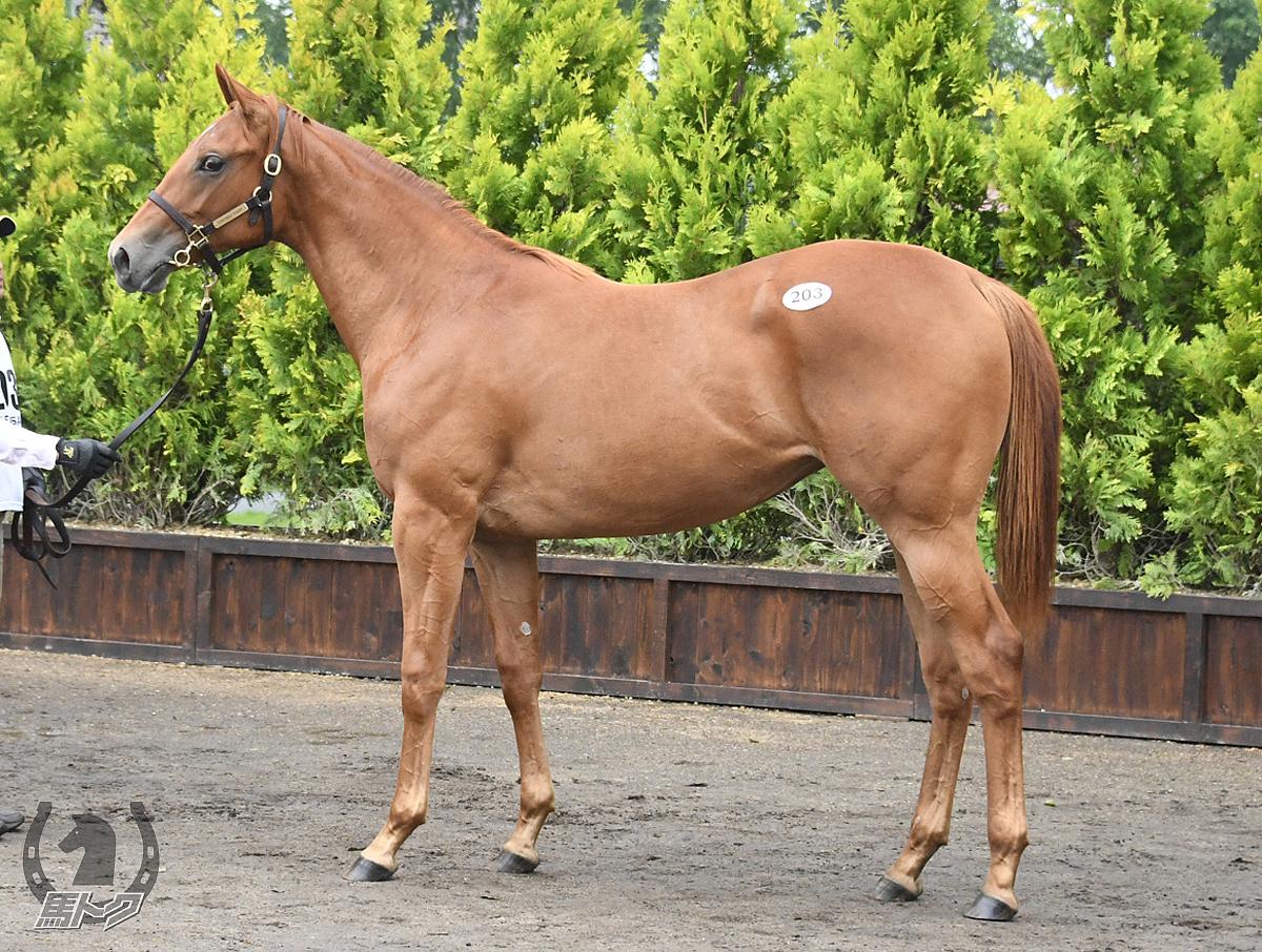 ロゼキルシュの馬体写真