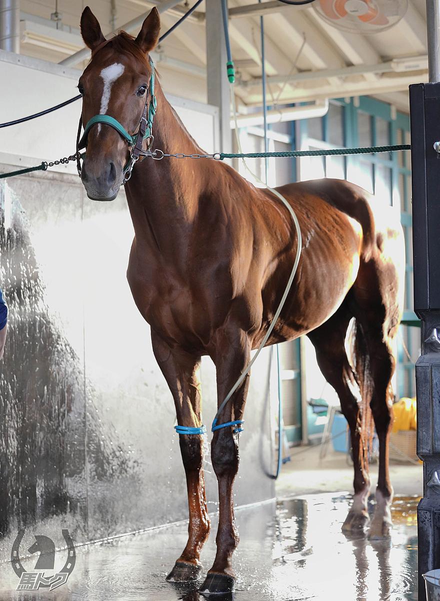 ロールオブサンダーの馬体写真