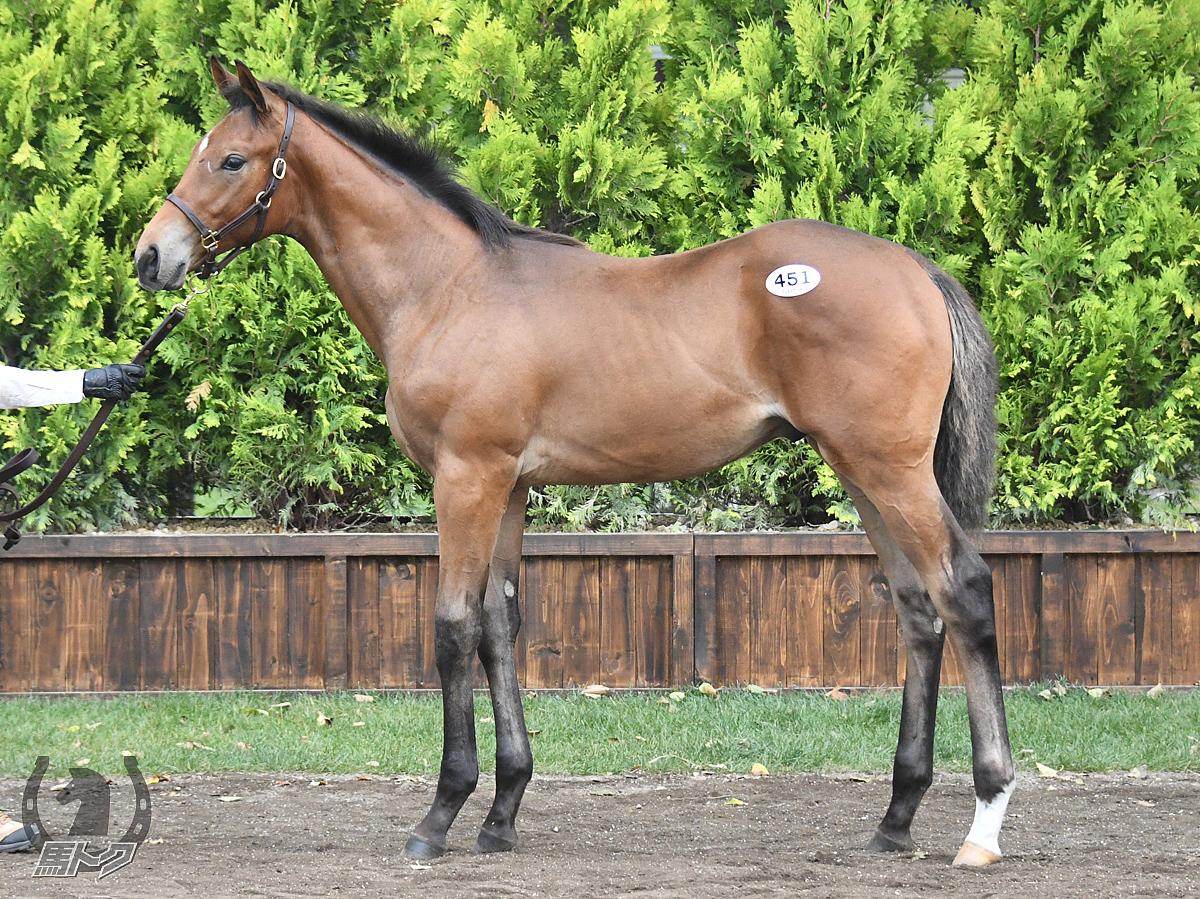 ウシュバテソーロの馬体写真