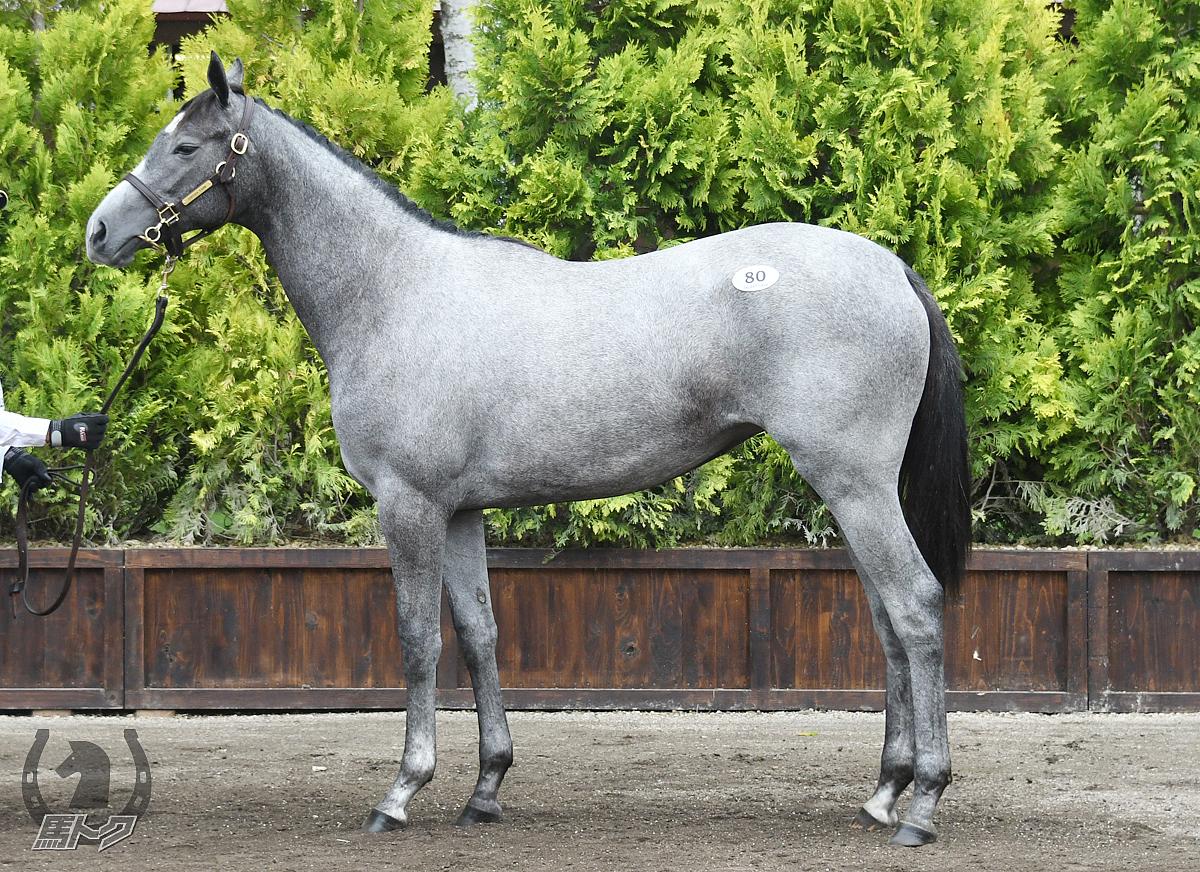 グレースケールの馬体写真