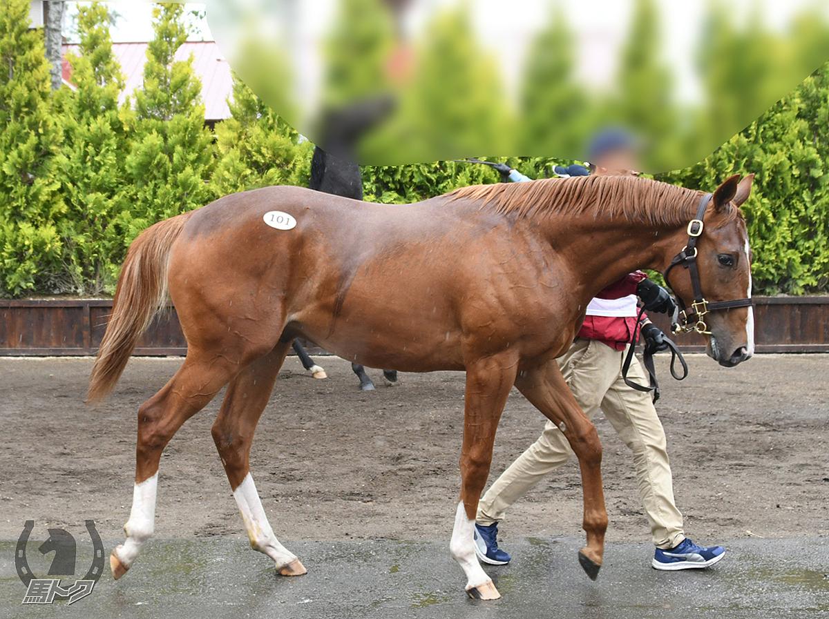 ジュビラーテの馬体写真