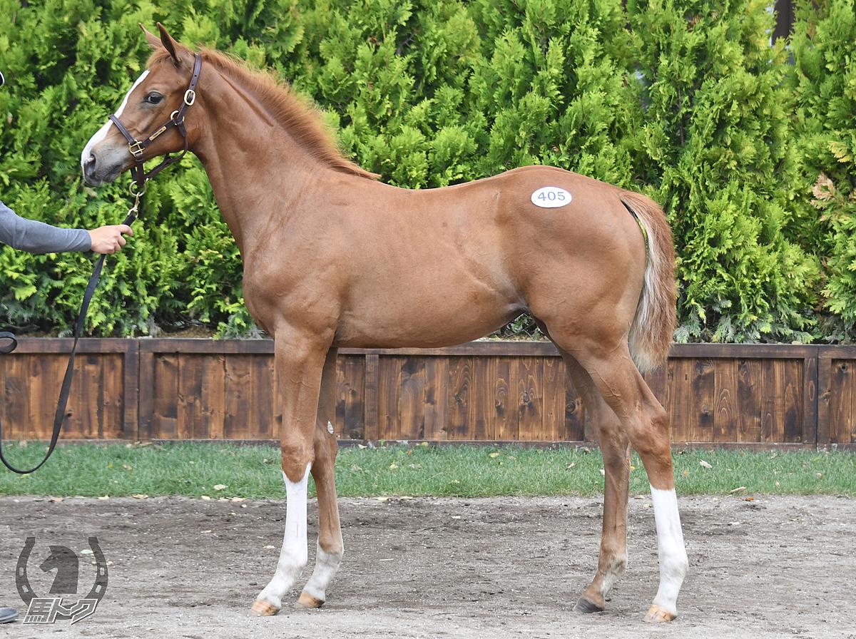 ペルルドールの馬体写真