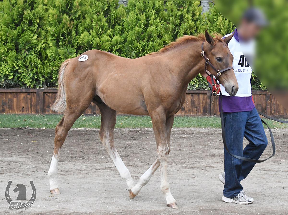 タッシーアキヒートの馬体写真