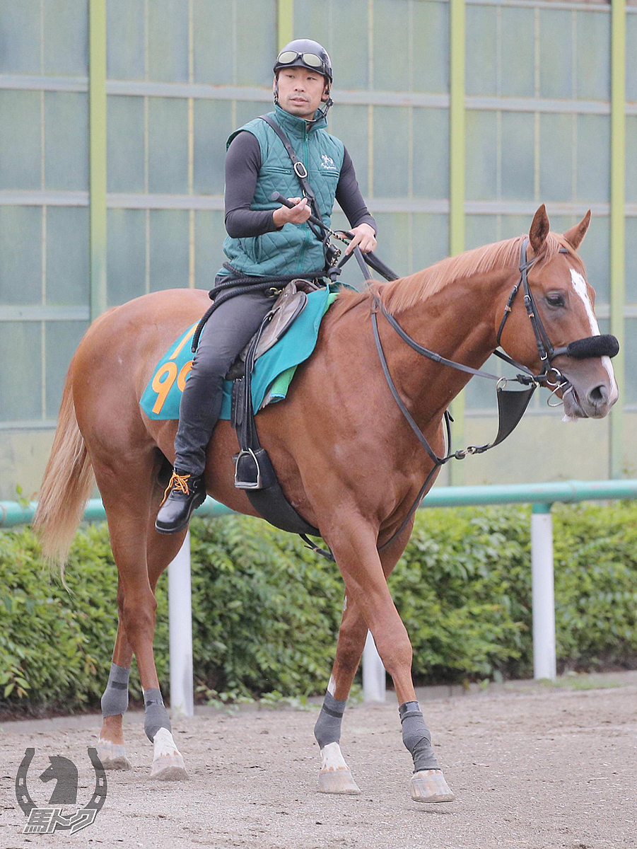 ラグリマスネグラスの馬体写真