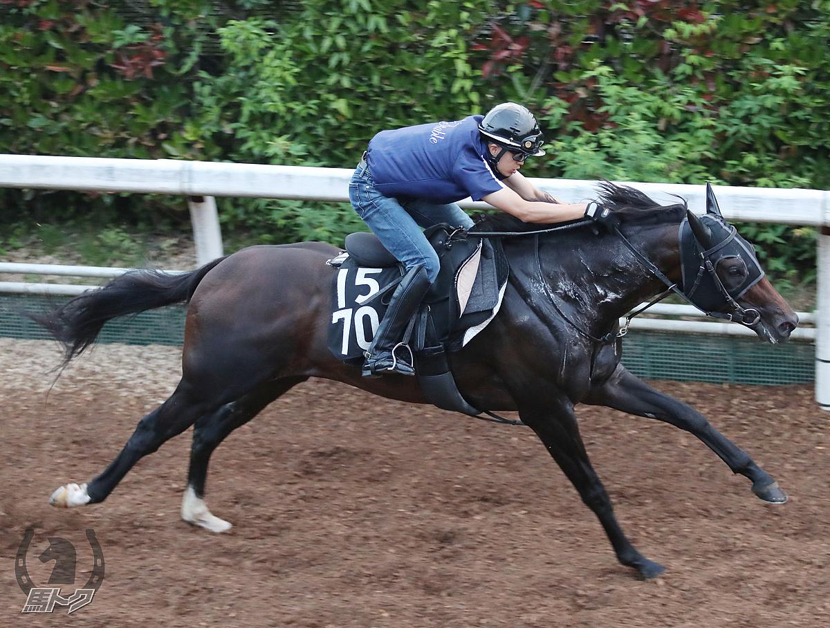 タイガーインディの馬体写真