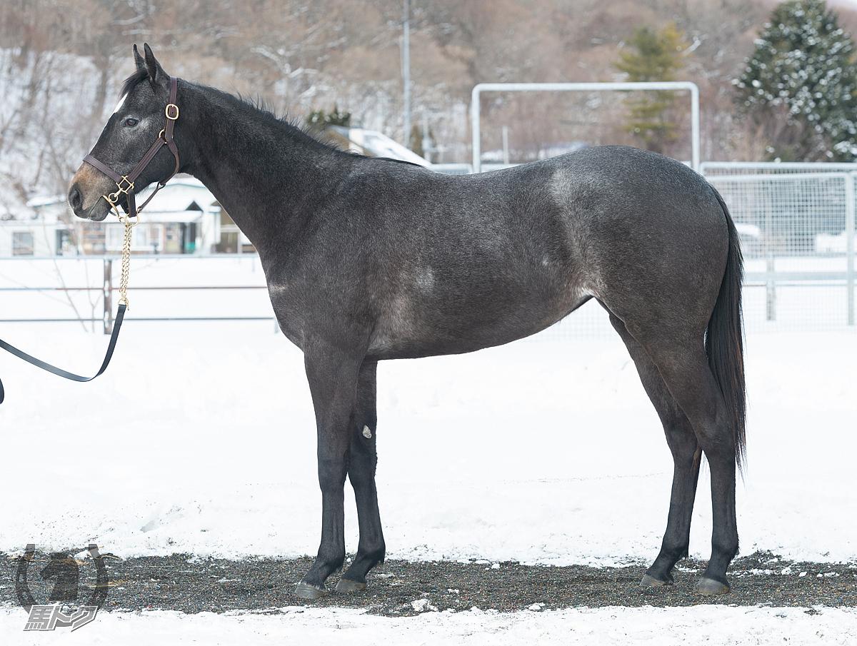 ネージュダムールの馬体写真