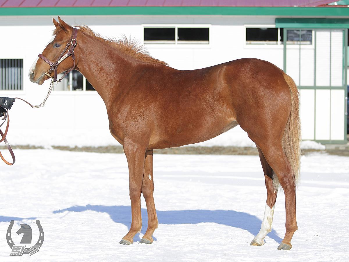 リオマッジョーレの馬体写真