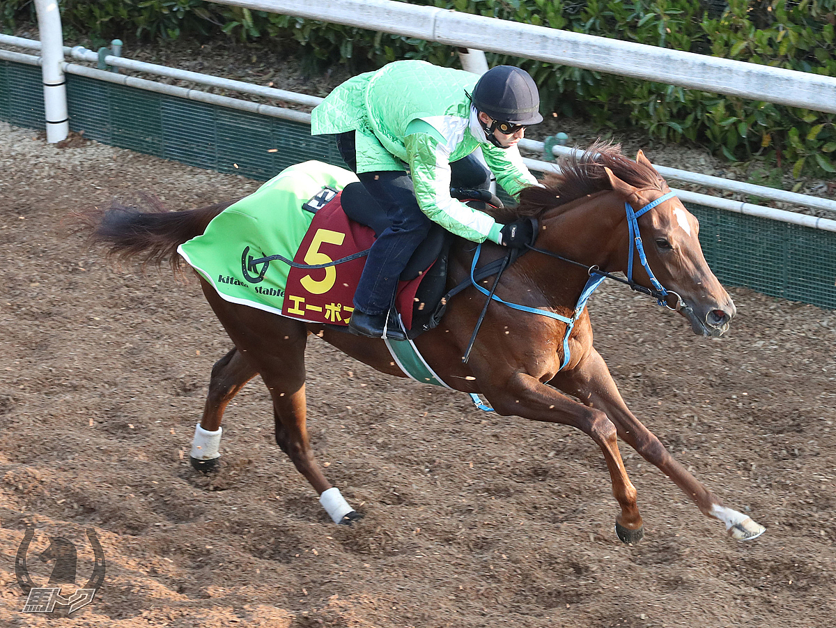 エーポスの馬体写真