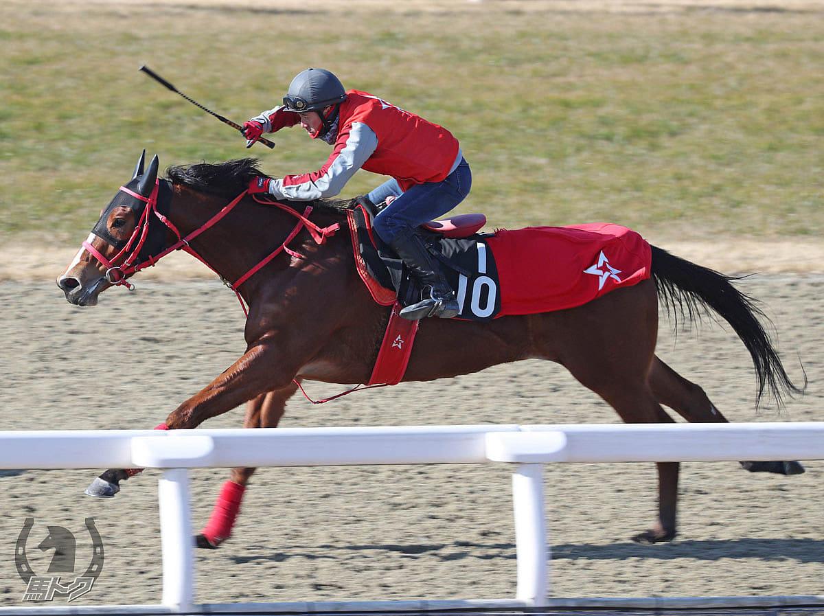 インザムービーの馬体写真