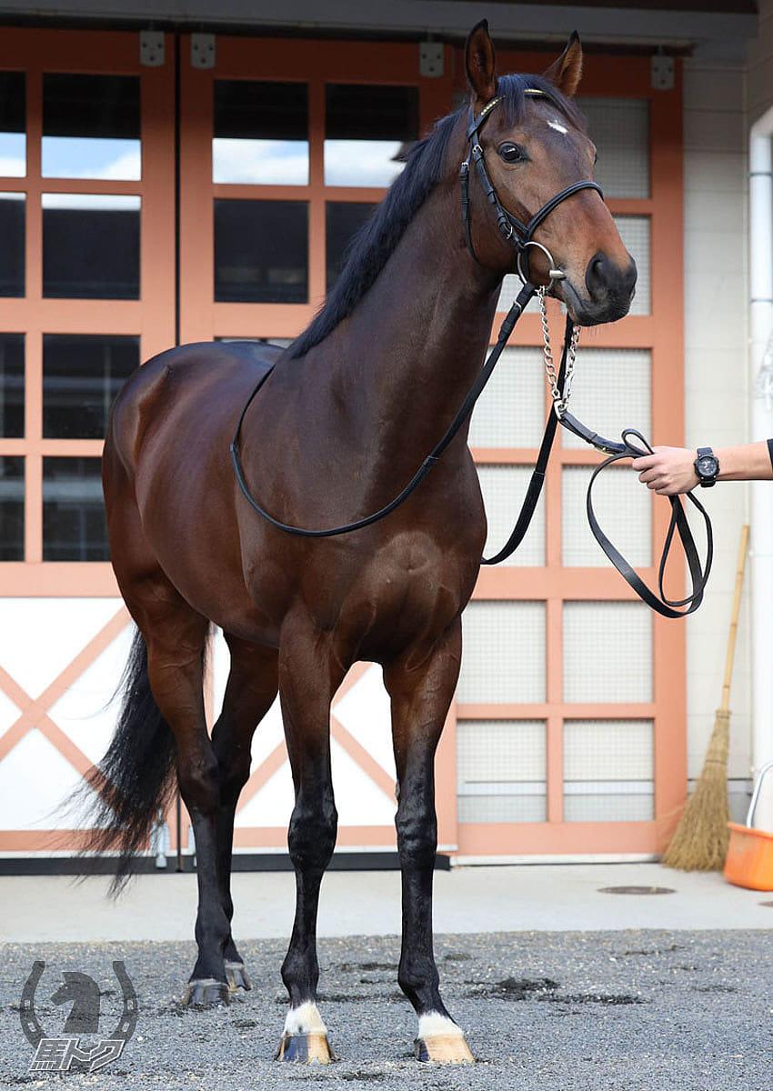 グランレイの馬体写真