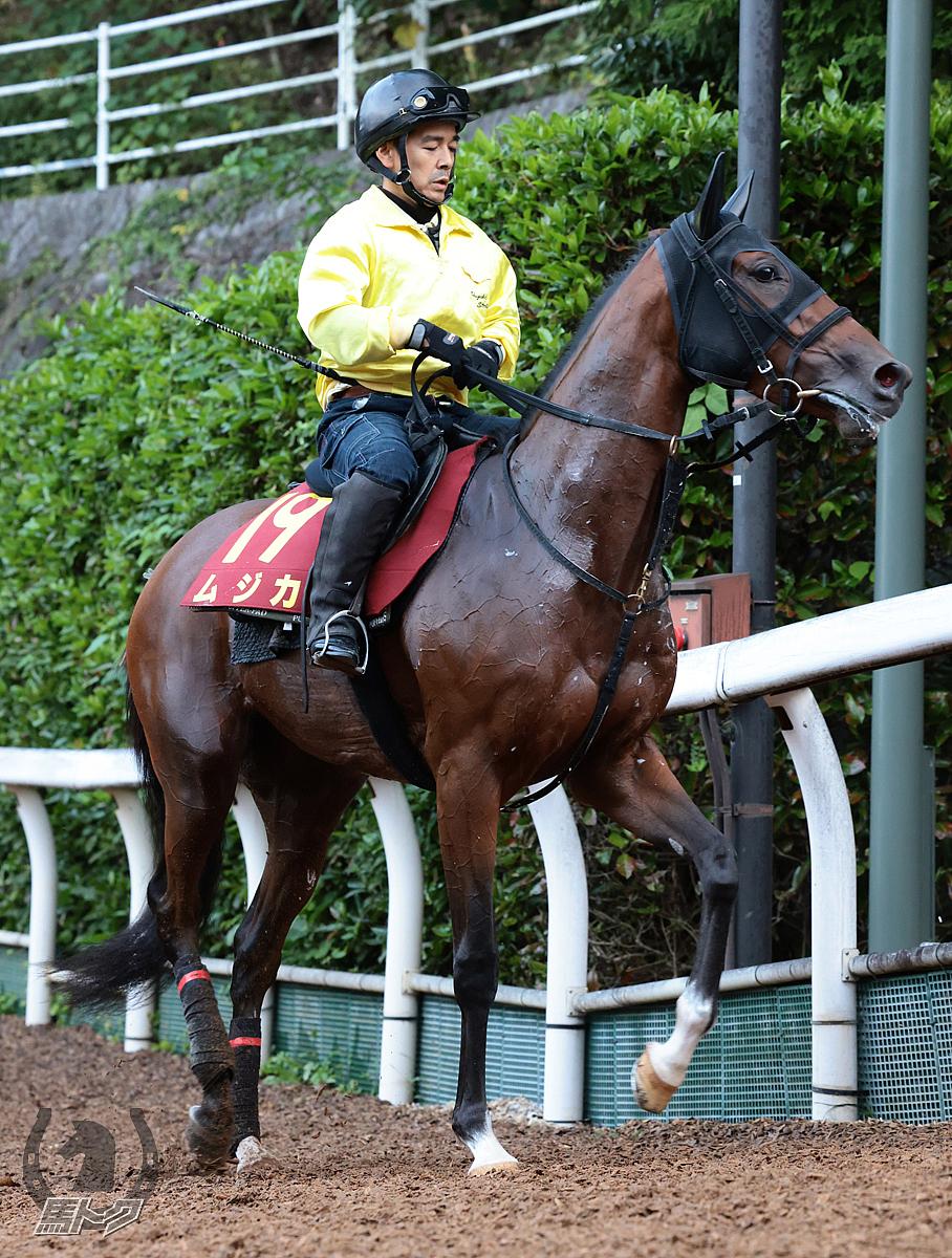 ムジカの馬体写真