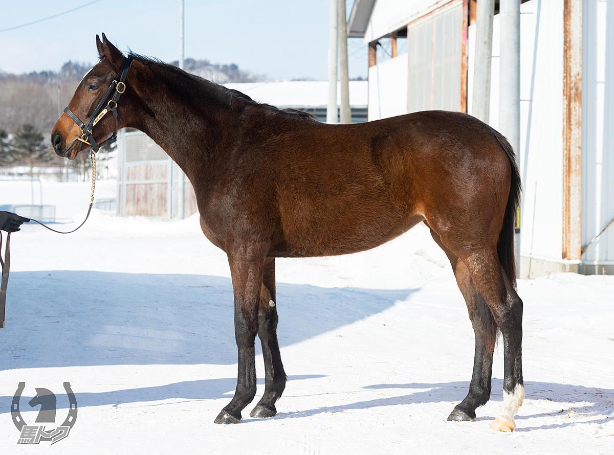 スプロールの馬体写真