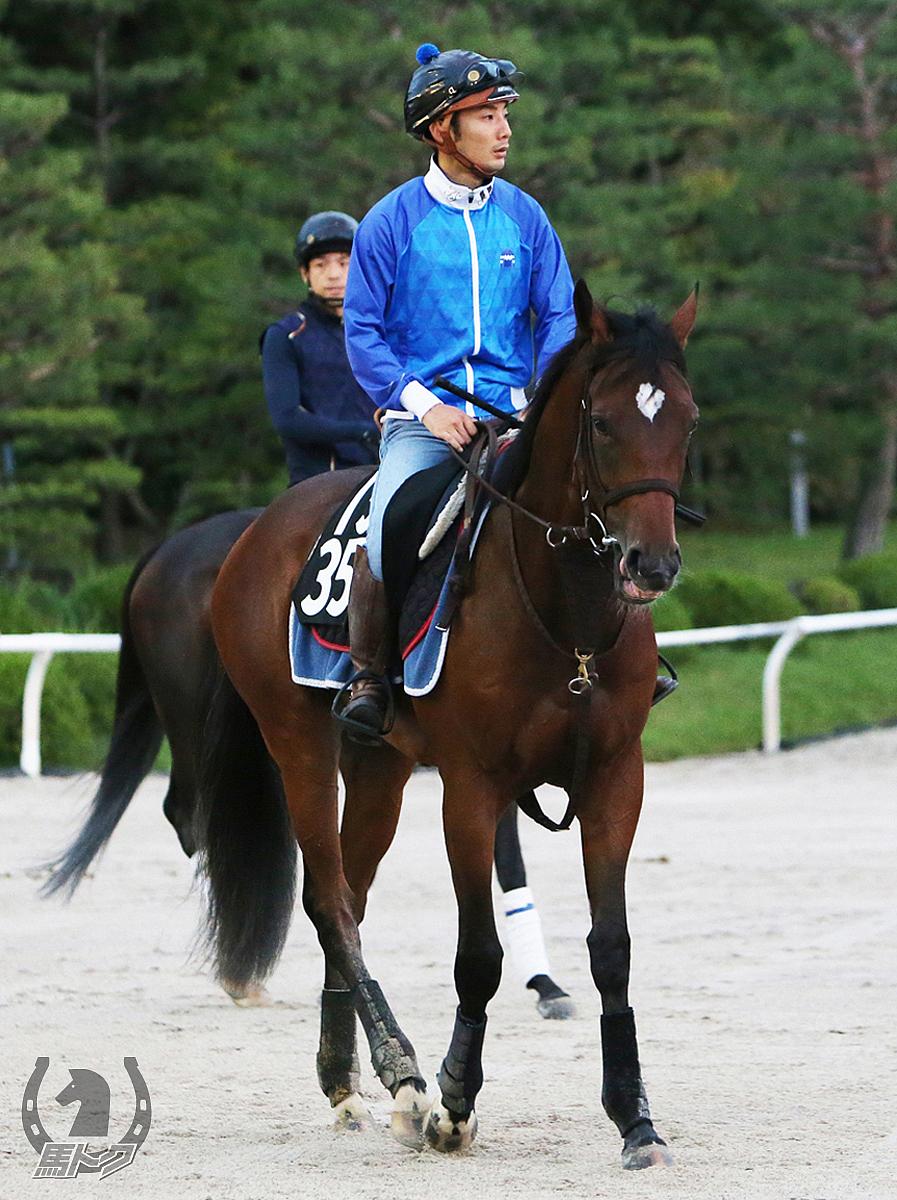 ロードエクスプレスの馬体写真