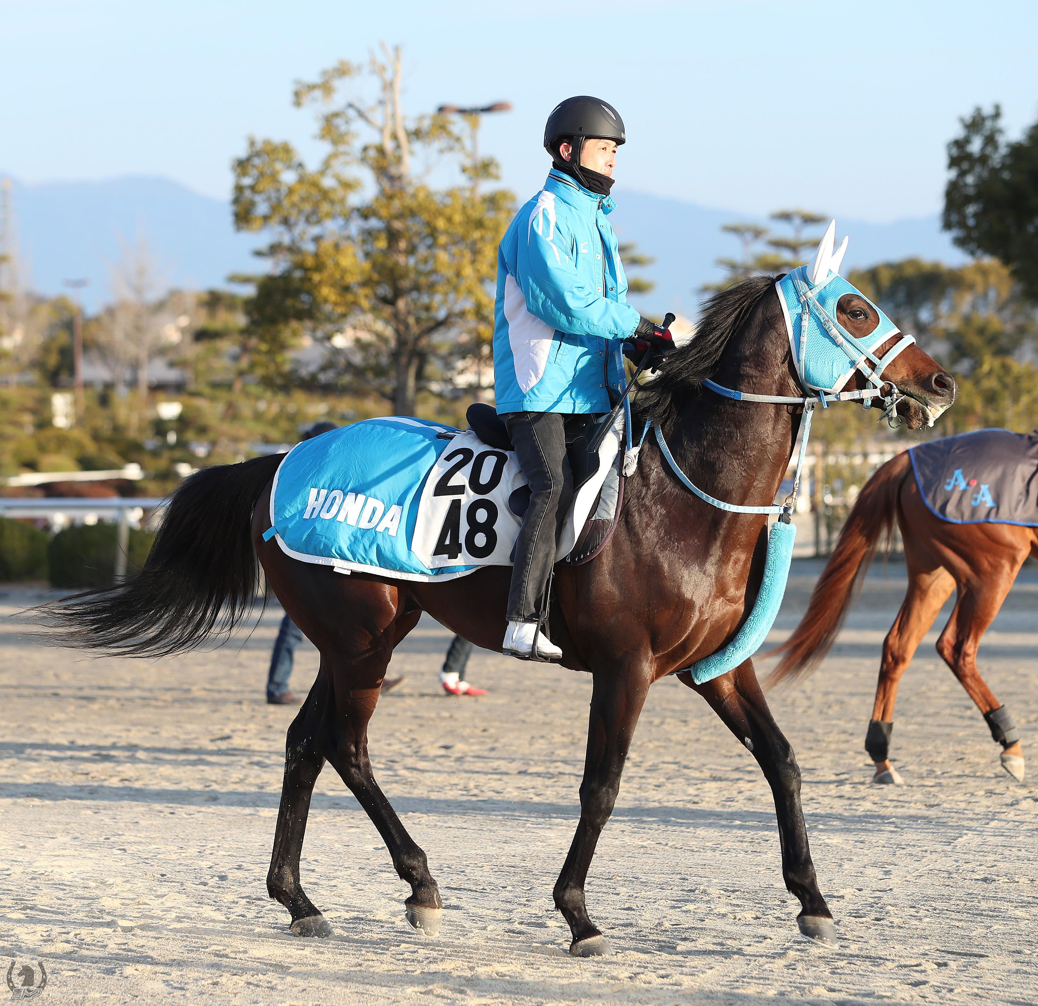 メイショウチタンの馬体写真