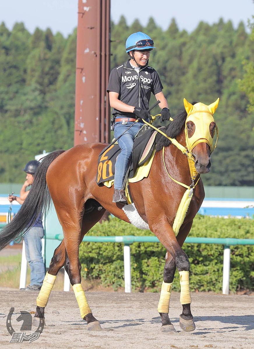 キタノオクトパスの馬体写真