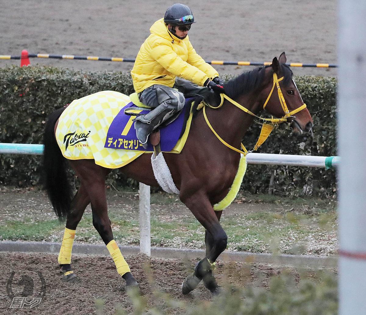 ディアセオリーの馬体写真