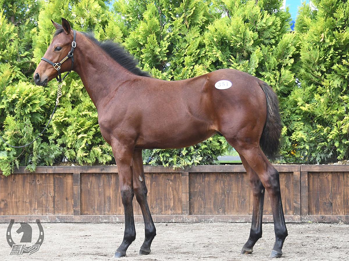 サクラジマテソーロの馬体写真