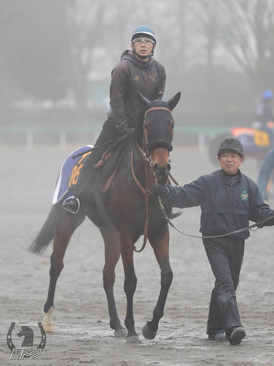 ニシノステラの馬体写真