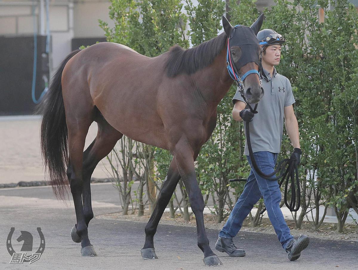 フェイバリットの馬体写真