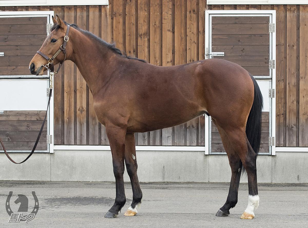 レッドラトゥールの馬体写真