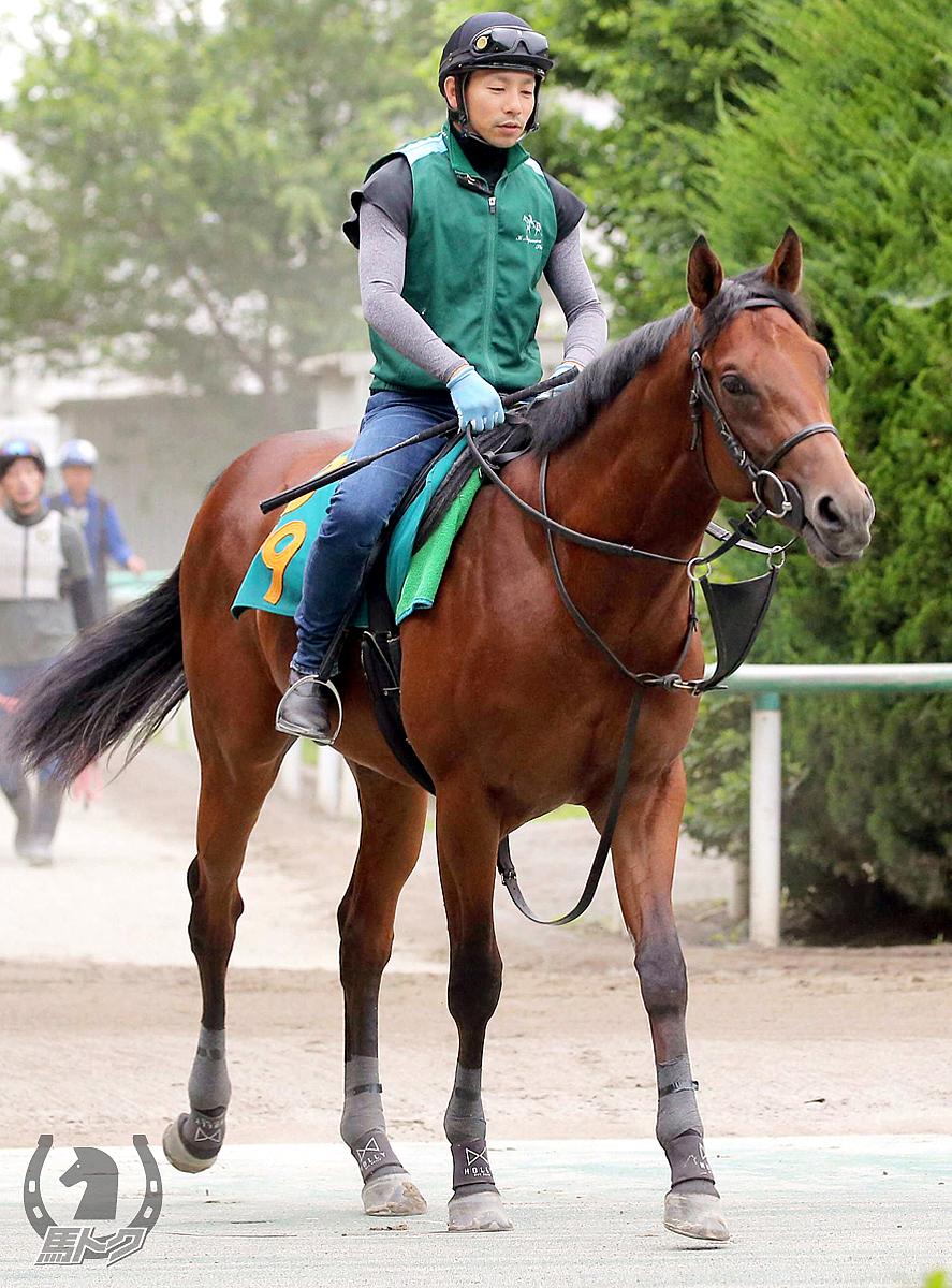 ウインドジャマーの馬体写真