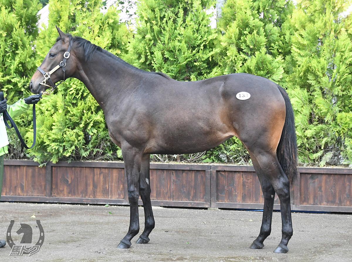 ミヤコシャンティの馬体写真