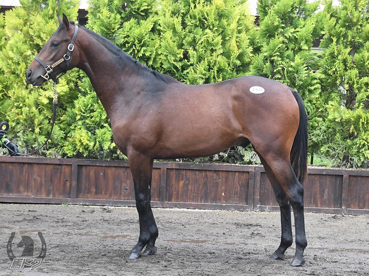 エクストラオールドの馬体写真