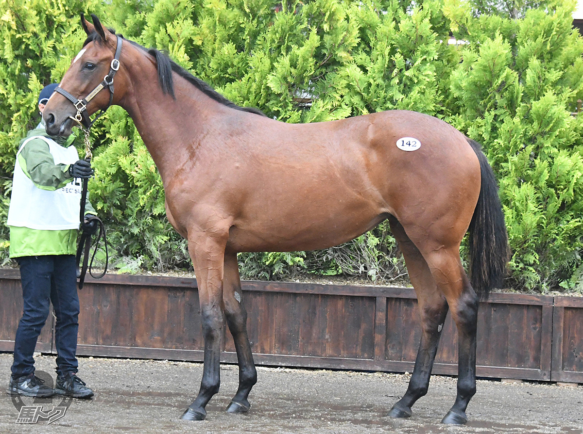 アルソリートの馬体写真