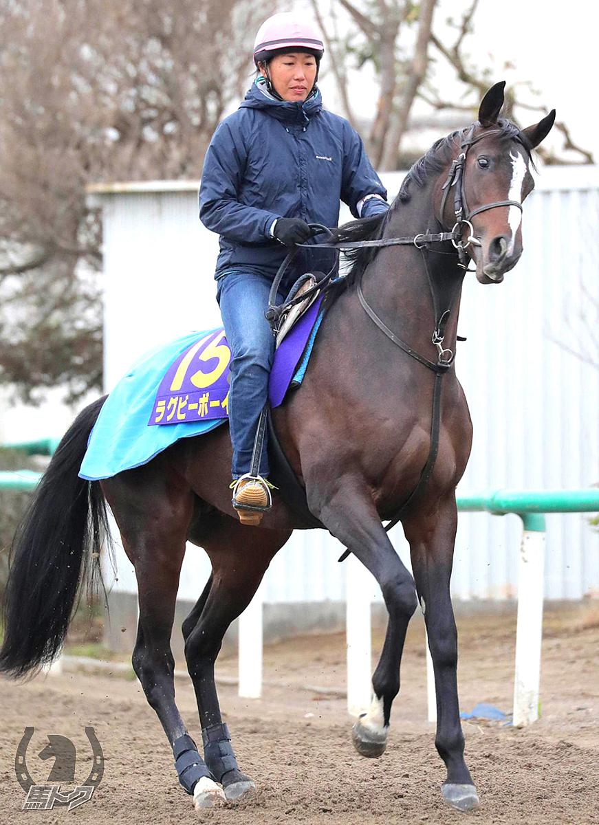 ラグビーボーイの馬体写真