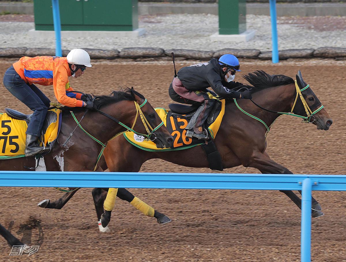 ルトロヴァイユの馬体写真