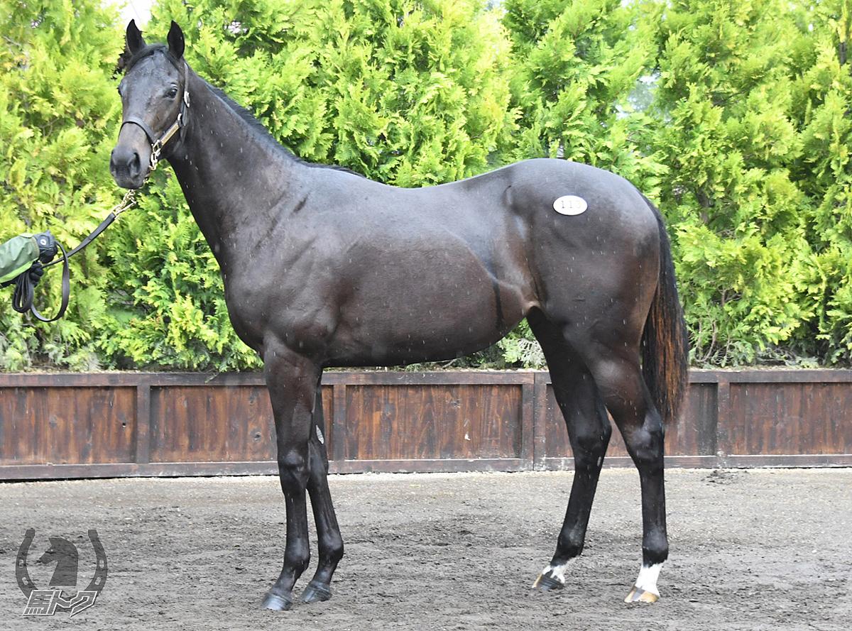 フジマサリアルの馬体写真