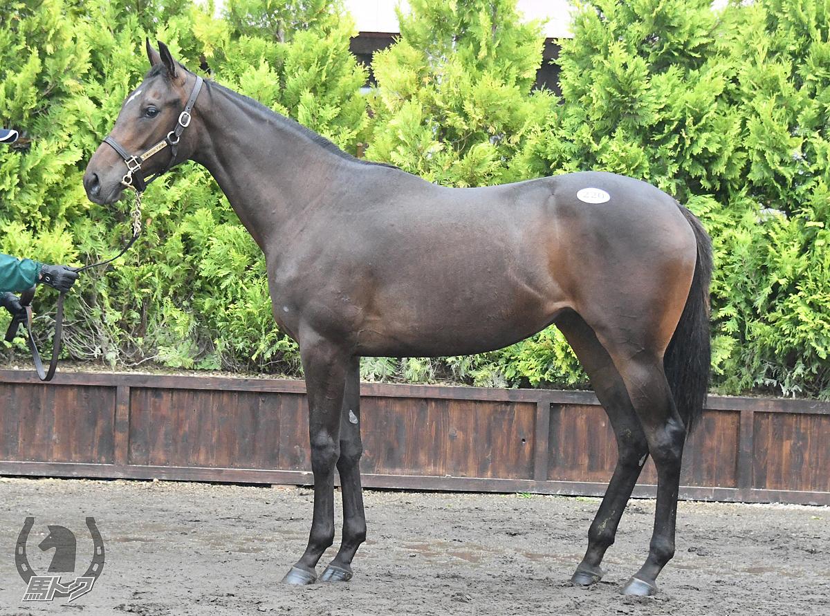 シルバータイドの馬体写真