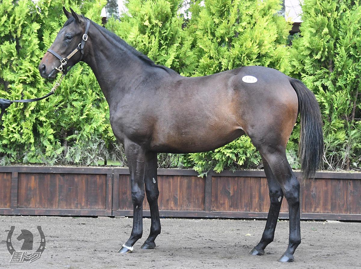 ミスミルドレッドの馬体写真