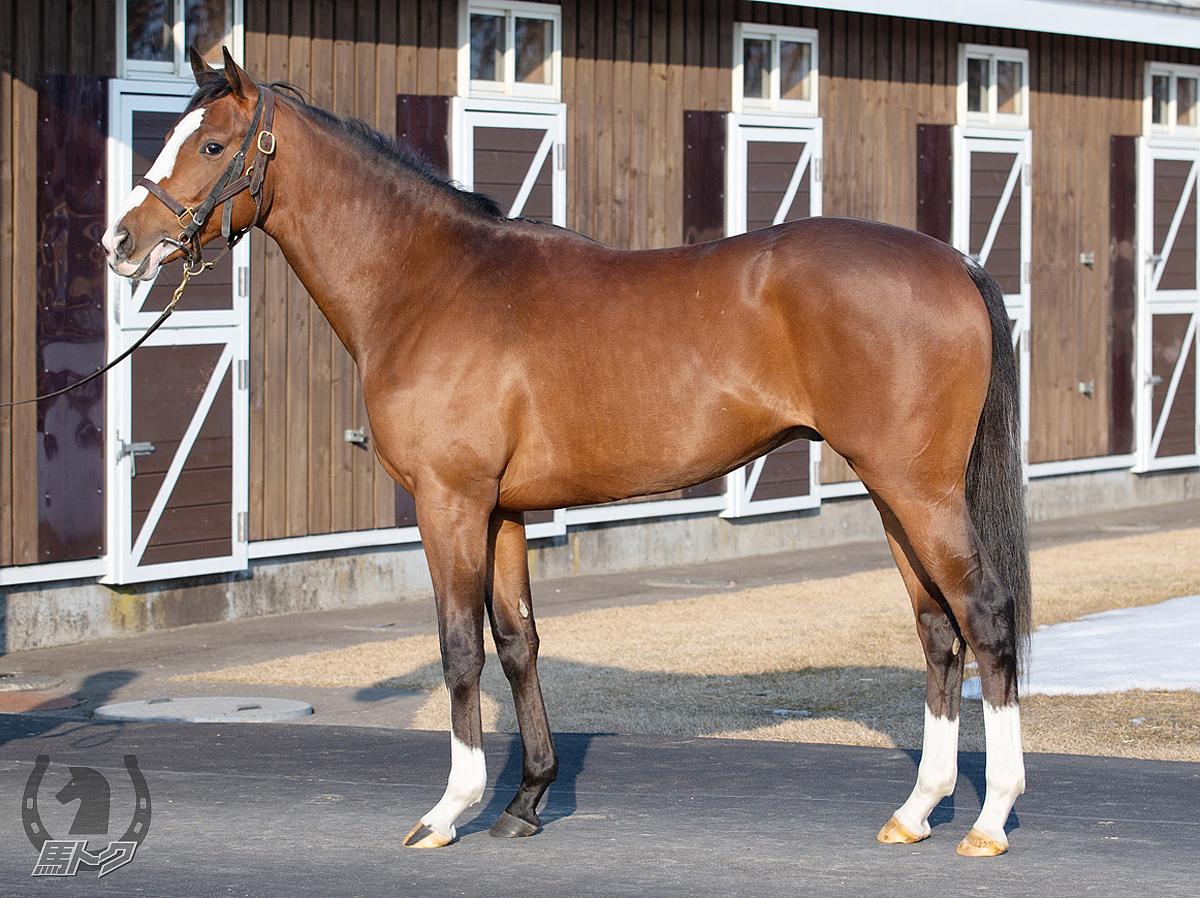モルトルバートの馬体写真