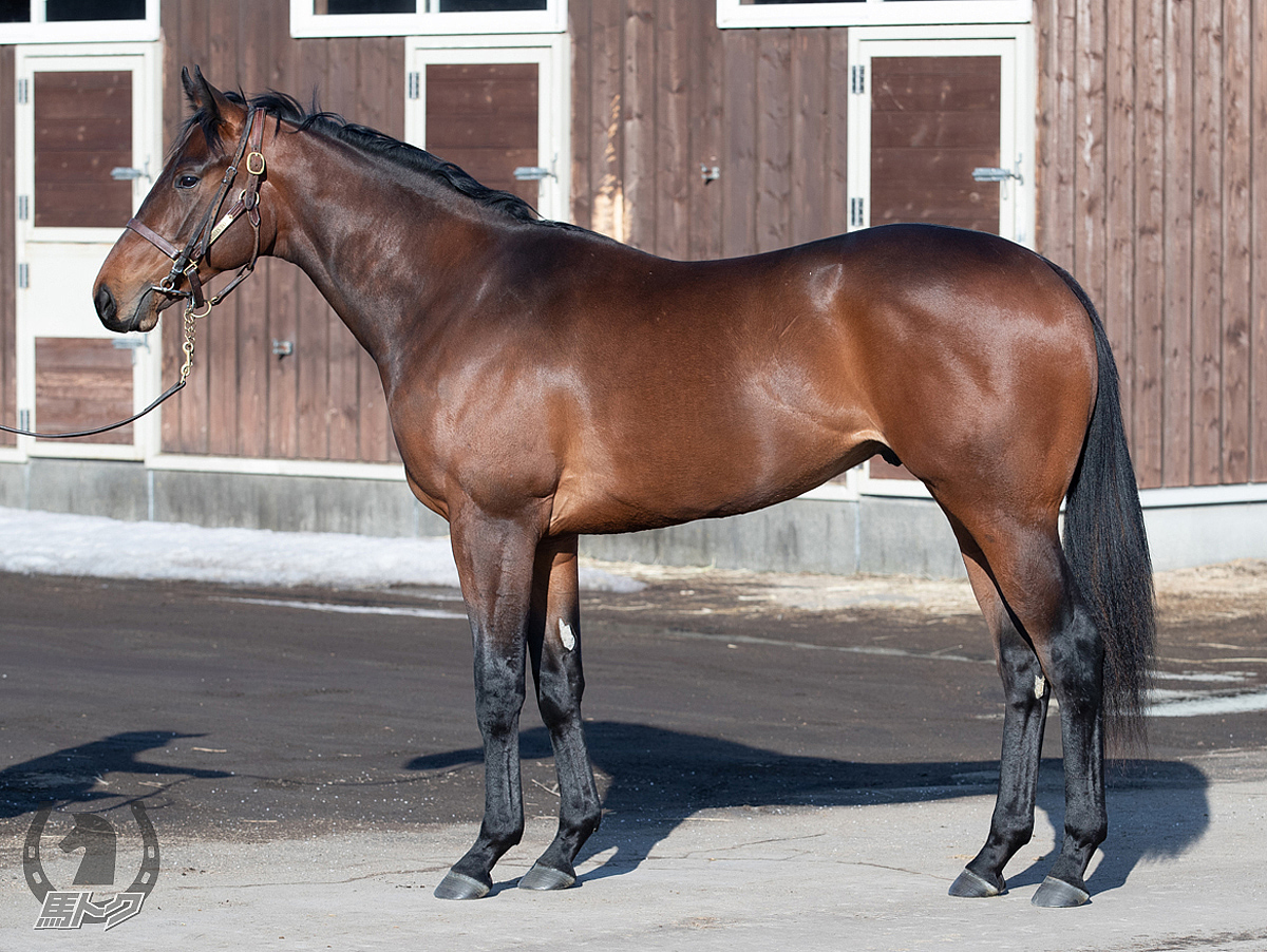 ベイサイドブルーの馬体写真