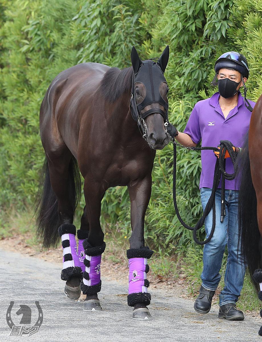 デゼルの馬体写真
